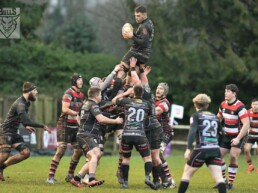 line out Ayrshire Bulls